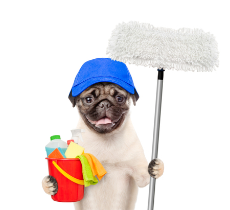 Cleaning concept. Dog in blue hat holds bucket with washing fluids and mop in paw. isolated on white background.