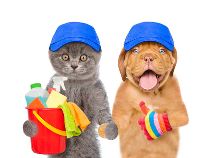 Cleaning concept. Puppy and kitten in blue hats holds bucket with washing fluids and rags in paws and showing thumbs up. isolated on white background.