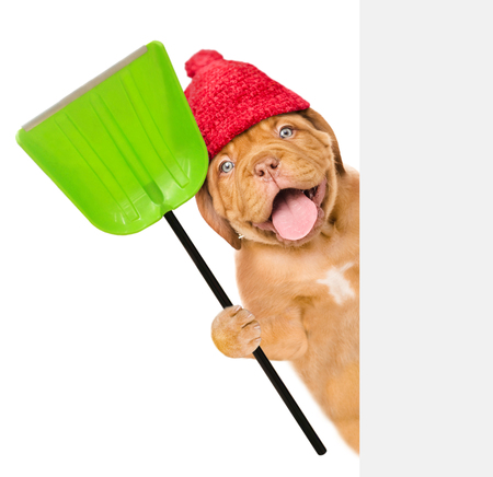 Funny dog  wearing a warm hat with pompon, holds a shovel above white banner. isolated on white background.