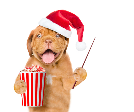 Funny dog in red christmas hat with popcorn basket and pointing stick. isolated on white background. Stock Photo