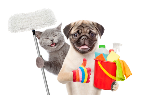 Conceito de limpeza. O gato e o cão guardam a cubeta com líquidos de lavagem e o espanador na pata e mostrar os polegares acima. isolado no fundo branco.
