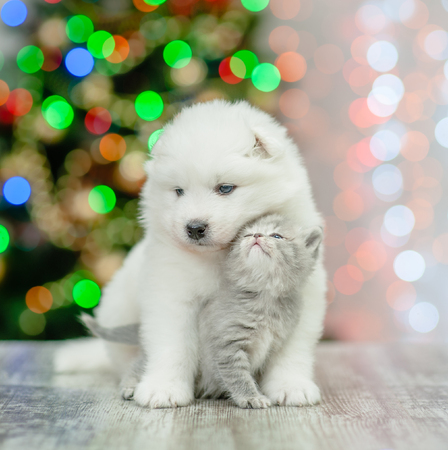 Samoyed puppy hugging a tender kitten on a background of the Christmas tree.
