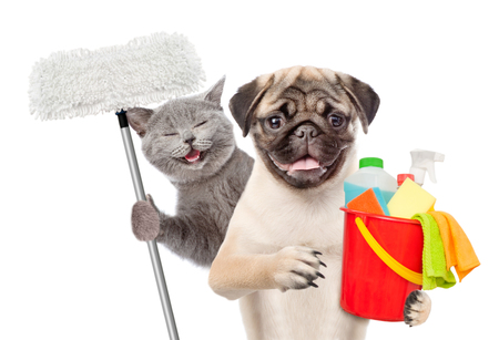 Cleaning concept. Cat and dog holds bucket with washing fluids and mop in paw. isolated on white background. Archivio Fotografico