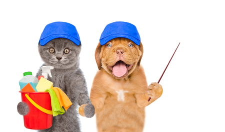Cleaning concept. Puppy and kitten in blue hats holds bucket with washing fluids and rags in paws and pointing away. isolated on white background. Stock Photo