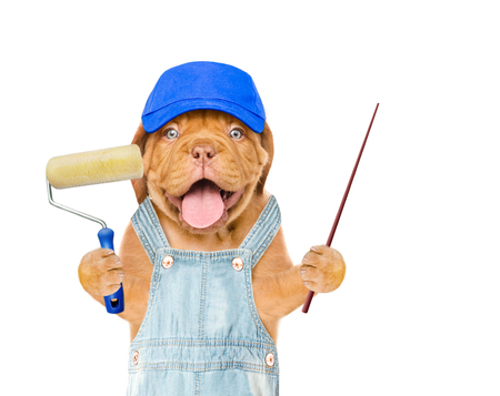 Funny dog in blue hat and overall with  paint brush and pointing stick. isolated on white background