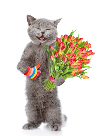 Happy cat with a bouquet of tulips showing thumbs up. isolated on white background.