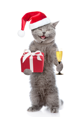 Happy cat in red christmas hat with gift box and glass of champagne. isolated on white background. Stock Photo