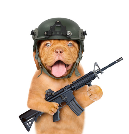 dog defender in helmet and with M16 rifle in paws. isolated on white background.