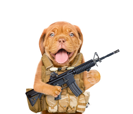 Funny puppy in  tactical vest with M16 rifle in paws. isolated on white background. 스톡 콘텐츠