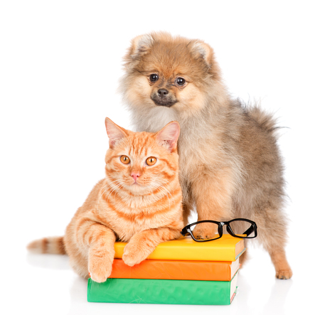 spitz puppy and cat on the books. isolated on white background. Stock Photo