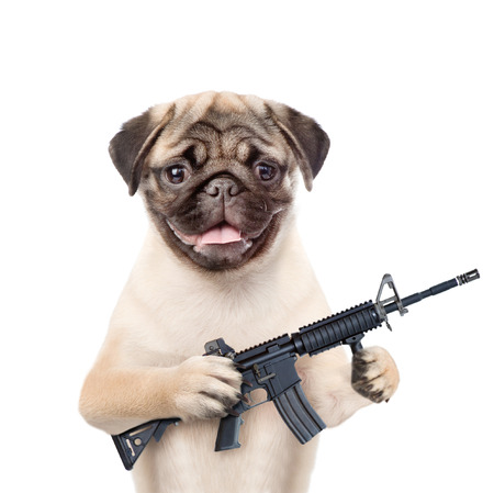 dog defender with M16 rifle in paws. isolated on white background.