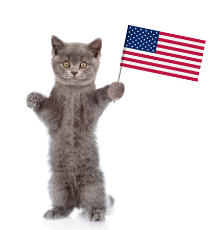 Kitten holding American flag in paw. isolated on white background.