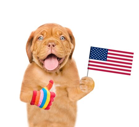Puppy holding American flag in paw and showing thumbs up. isolated on white background.