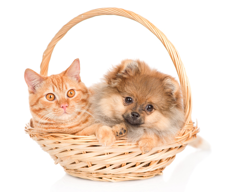 Kitten and puppy sitting inside basket. isolated on white background. Stock Photo