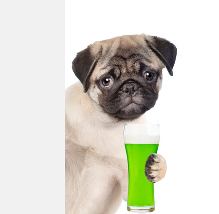 St Patricks Day concept. Funny puppy with a glass of green beer behind white banner. isolated on white background. Stock Photo