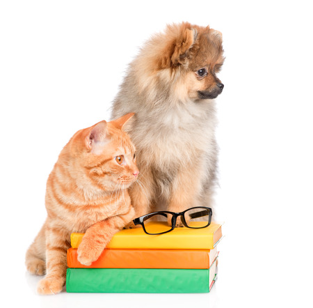 spitz puppy and cat on the books looking away. isolated on white background.
