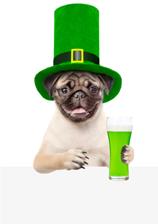 St. Patricks Day. Funny puppy with a glass of green beer above white banner. isolated on white background.