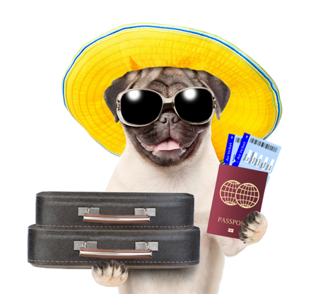 Funny puppy with summer hat and sunglasses holds suitcases, tickets and passport ready for a vacation. isolated on white background.