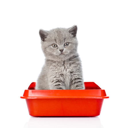 Baby kitten sitting in litter box. isolated on white background. Archivio Fotografico