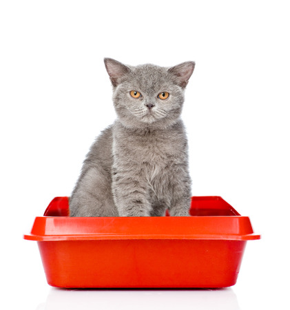 Adult cat sitting in litter box. isolated on white background. Archivio Fotografico