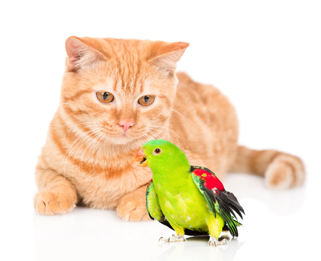 Cat and colorful parrot. isolated on white background.