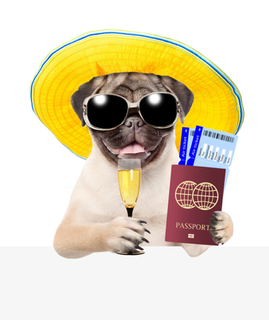 Funny puppy with summer hat and sunglasses holds airline tickets, passport and champagne  above white banner. isolated on white background.