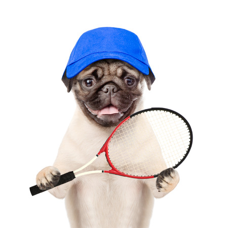 Funny puppy in cap with tennis racket. isolated on white background. Stock Photo