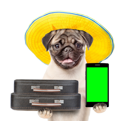 Funny dog holds suitcases and smartphone. isolated on white background.