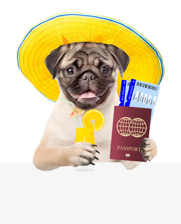 Funny puppy in summer hatholds airline tickets, passport and tropical cocktail above white banner. isolated on white background.