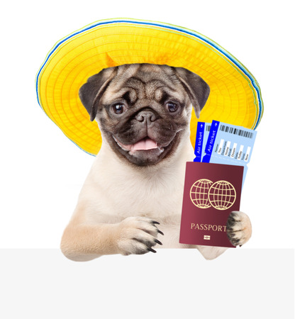 Dog in summer hat holds airline tickets and passport above white banner. isolated on white background. Stock Photo