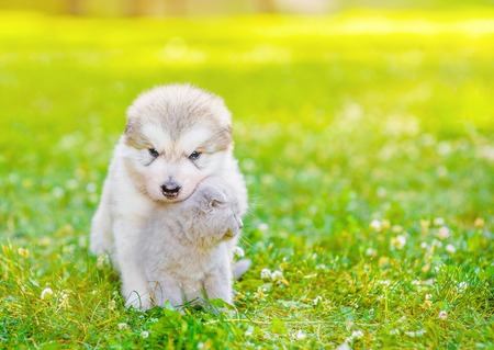 Cute puppy hugs kitten on summer green grass. Space for text. Stock Photo