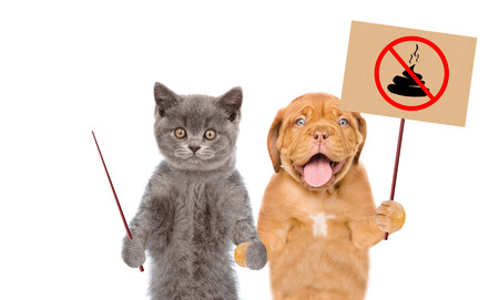 Cat and dog holds sign no dog poop. Concept cleaning up dog droppings. isolated on white background.
