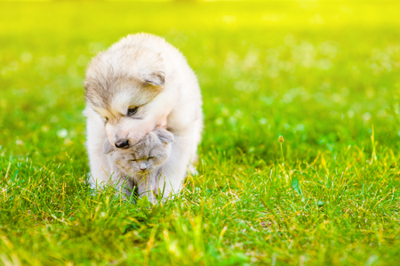 Playful puppy with kitten on summer green grass at sunset. Space for text. Stock Photo