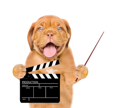 Puppy holding pointing stick and clapper board for making video cinema. Movie production clapper board or slate film concept. isolated on white background.
