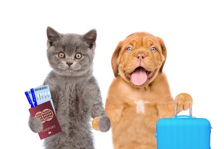 Kitten and puppy holds suitcases, airline tickets and passport ready for a vacation. isolated on white background.
