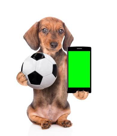 Dachshund puppy holding a smartphone and soccer ball. Isolated on white background.
