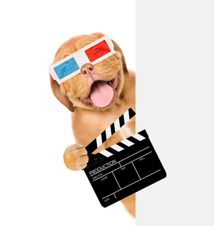 Puppy in 3d glasses holding clapper board for making video cinema. isolated on white background.