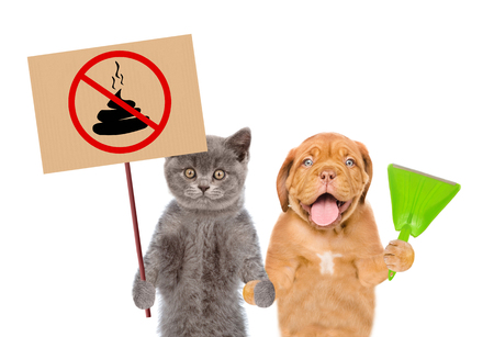 puppy and kitten holds plastic scoop and sign no dog poop. Concept cleaning up dog droppings. isolated on white background.
