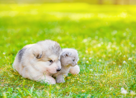 Cute puppy and kitten lying together on summer green grass. Space for text. Stock Photo