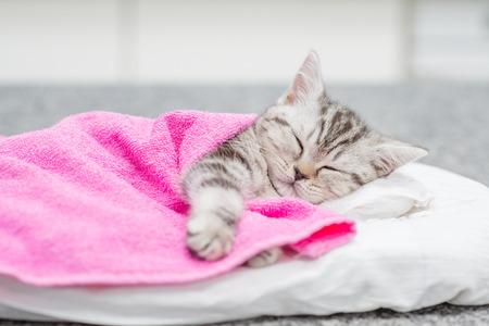 Cute taby kitten sleeping on pillow under blanket.