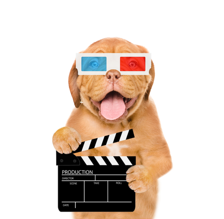 Puppy in 3d glasses holding clapper board for making video cinema. Movie production clapper board or slate film concept. isolated on white background.