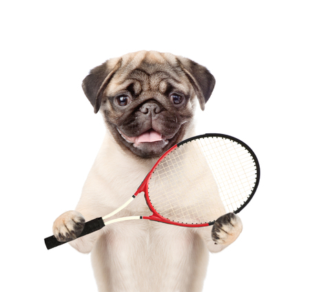 Funny puppy with tennis racket. isolated on white background. Stock Photo