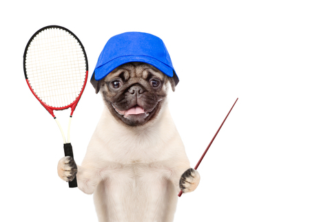 Funny puppy  in blue cap with tennis racket and pointing stick. isolated on white background.