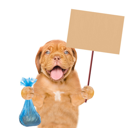 puppy holds plastic bag and placard. Concept cleaning up dog droppings. isolated on white background.