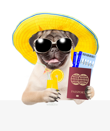 Funny puppy with summer hat and sunglasses holds airline tickets, passport and tropical cocktail above white banner. isolated on white background. 写真素材