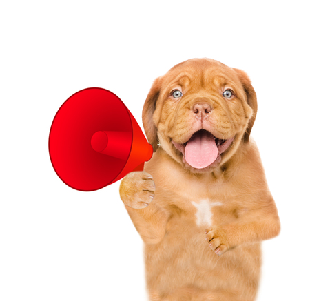 Funny puppy with a megaphone. isolated on white background.