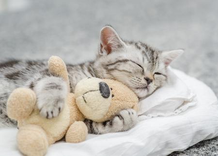 Nettes Kätzchen, das mit Spielzeugbär schläft. Standard-Bild