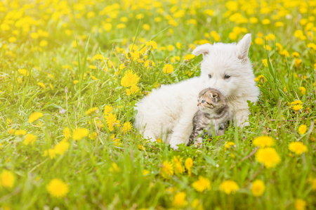 kitten and puppy lying together on summer grass. Space for text. Stock Photo