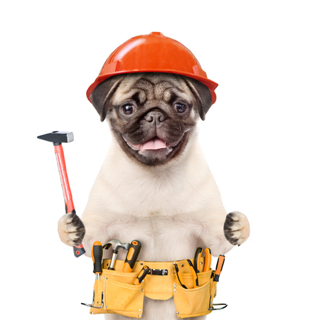 Funny puppy in hard hat with tool belt and hammer in paws. Isolated on white background.