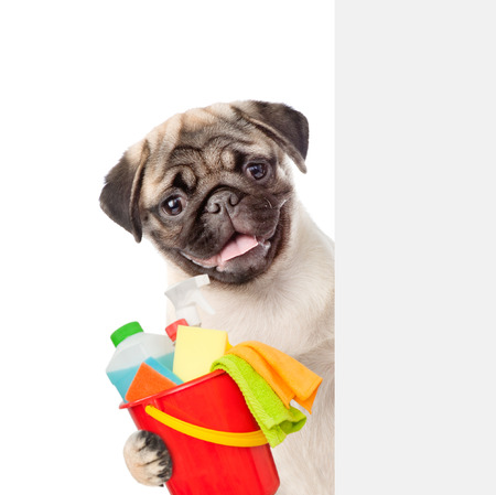 Cleaning concept. Puppy above white banner holds bucket with  washing fluids and rags in paws. isolated on white background.